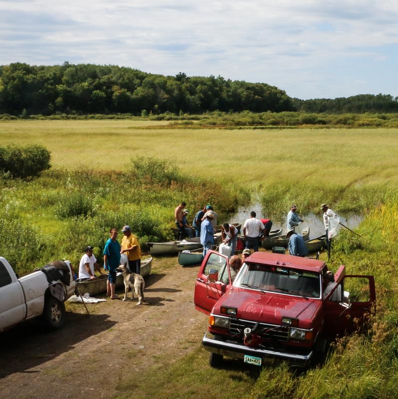 A photograph of a gathering of people and canoes on the shore of Dead Fish Lake on the Fond du Lac Ojibwe Reservation during wild rice harvest season.