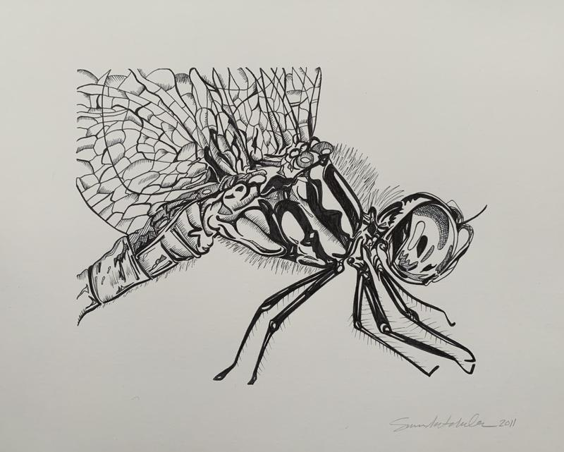 Black ink on white paper: a detailed and cropped close-up of a dragonfly