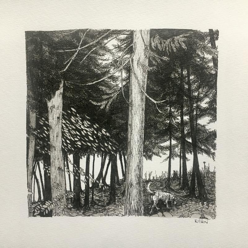 A black and white drawing of a dog snuffling under the trees along the shore of Gunflint Lake