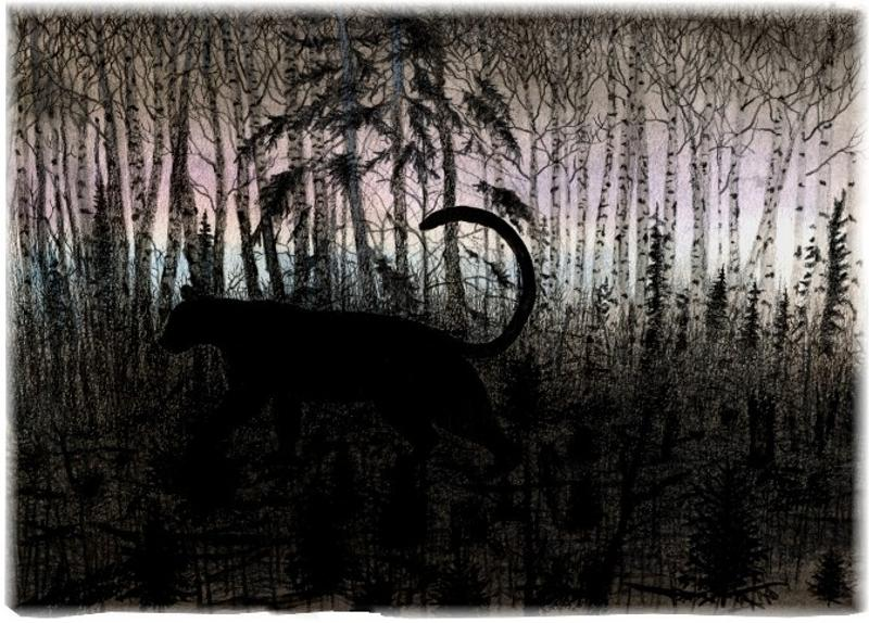 A silhouette of a pacing cougar in black on palest pink and blue, with forest trees, shrubs and logs in black standing, surrounding the cougar above and below.
