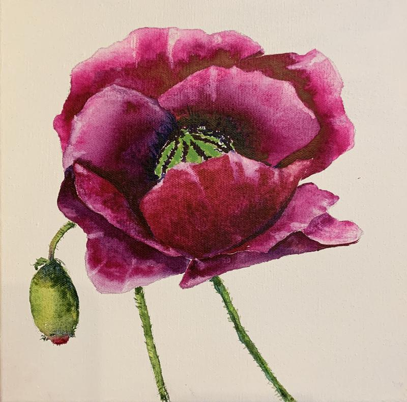 This is a floral watercolor Painted on a white canvas. The image is of a red and pink poppy, with some detail of the center of the poppy, and a green bud ready to pop open.