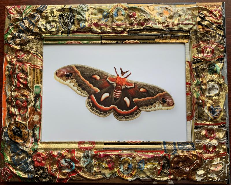 """Digital photo of a Cecropia moth - look at the edges of the wings, do you see the """"snake eyes"""" that protect the moth from predators? The frame is made with cigar bands, that have been glued and hammered onto an old textured metal frame found in a junk store."""