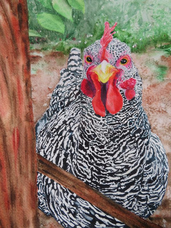 Variegated black and white hen with red accoutrements held in backyard with various wooden boards.