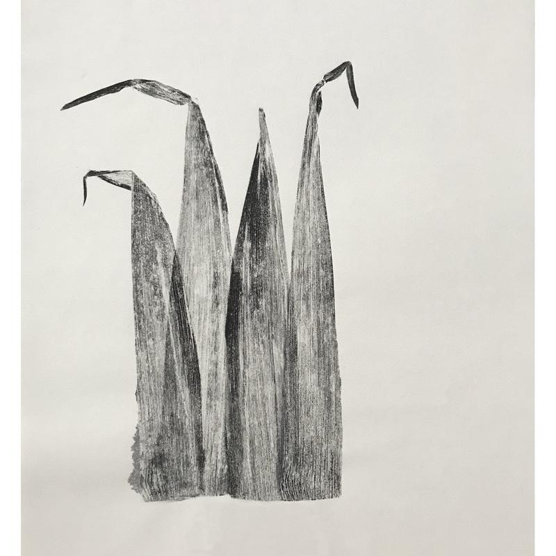 Four pieces of corn husk printed in black on white paper to highlight each textured line of the husks.
