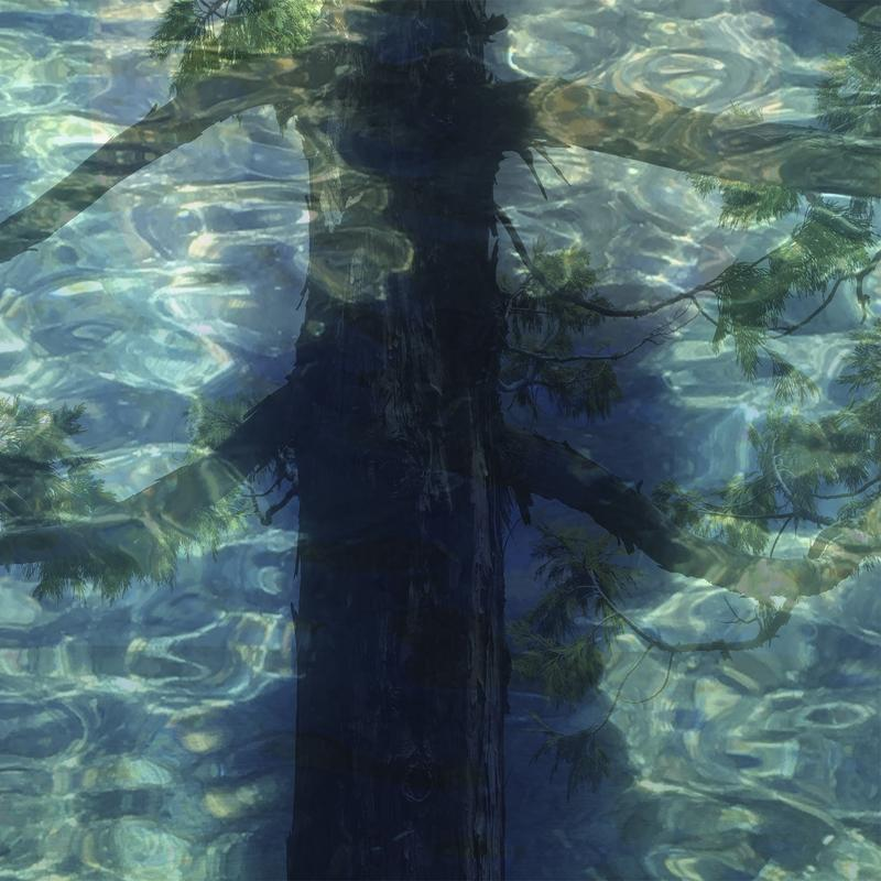 "clear, green-blue, wavy, sunlit water with dark blue shadow of a woman down center of image. Through the shadow, the trunk and branches of a cedar tree can also be seen with cedar's characteristic ""open arms"" stretching out to edges of image. Tree, woman and water merge into one impression."