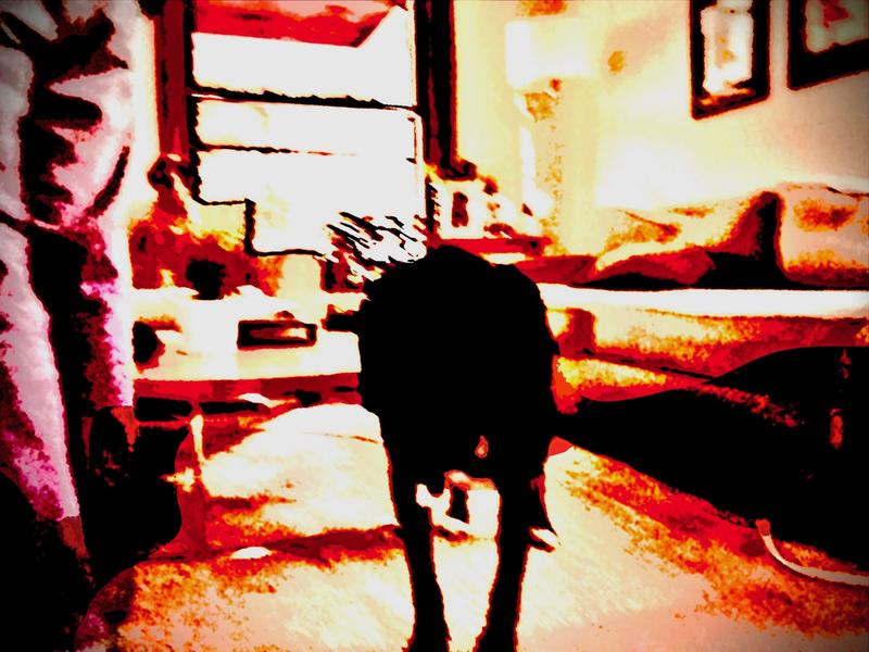 There is an outline of a dog in the forefront.  To shadow image in in a what appears to be a burred room with a couch to the right and a window in the background.  The colors are orange and red with dark shapes on the left side.
