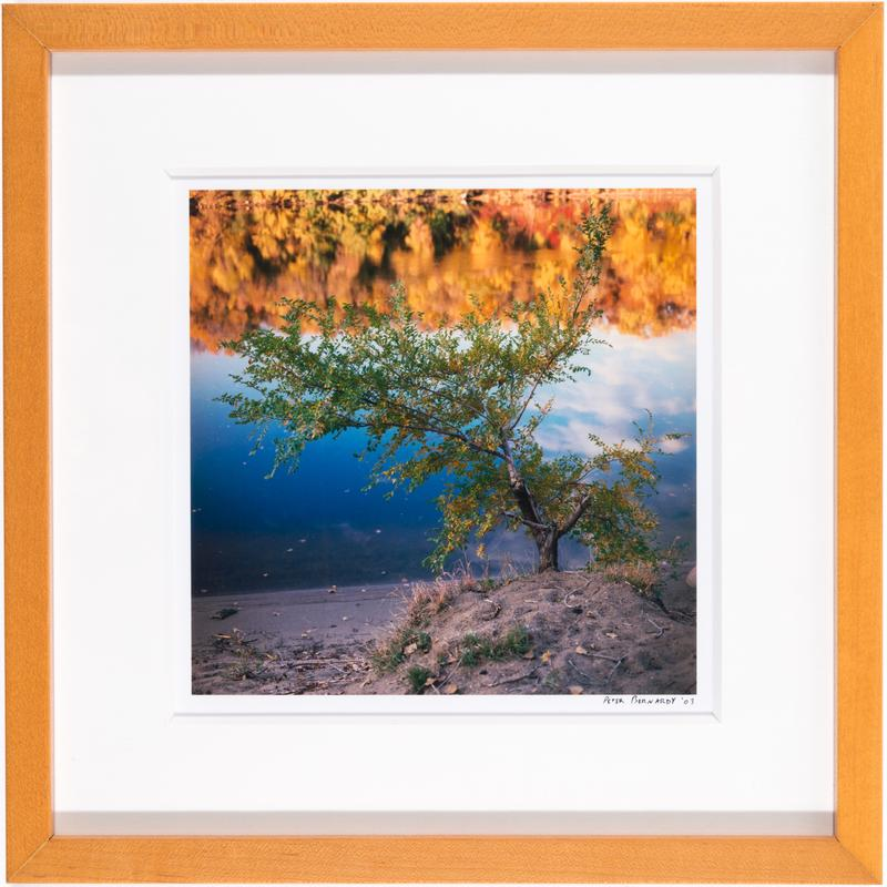 A photograph of a tree on the river bank with fall foliage reflecting in the water.