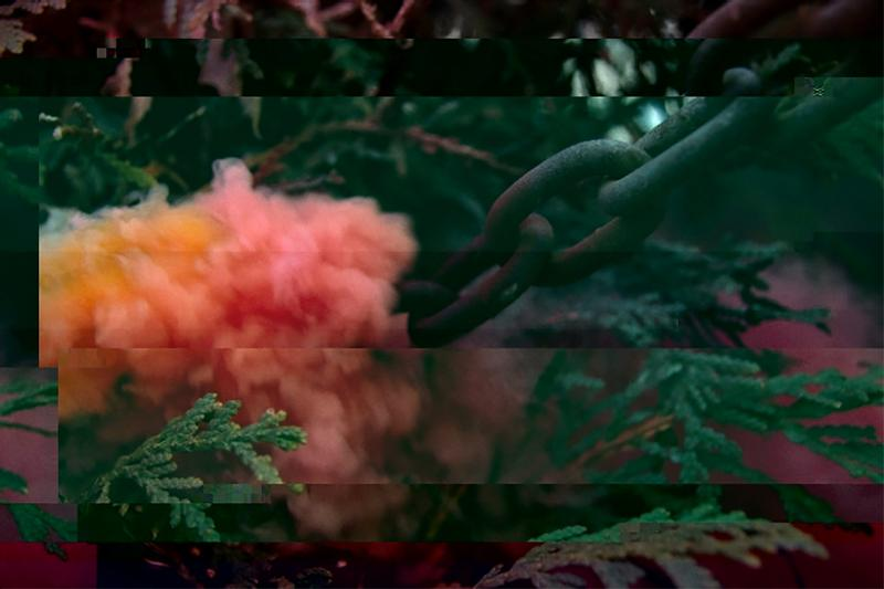 This is a glitched photo of pink smoke interacting with a shrub and chain.