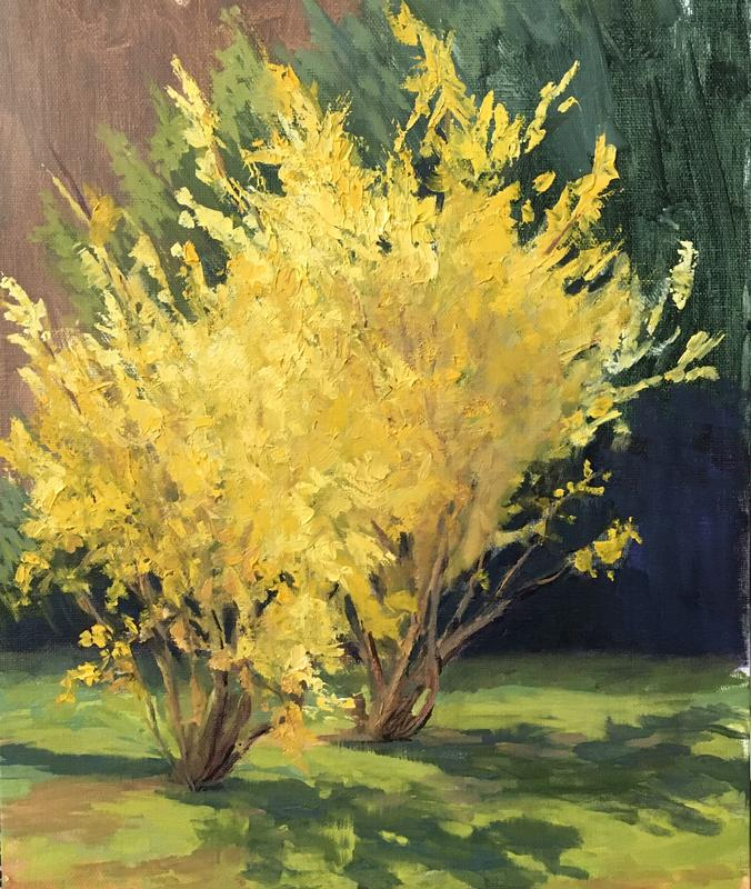 A painting of the first blooms of spring Forsythia, spring sunlight bright yellow blooms. Light and shadow on grass. Plein air painting.