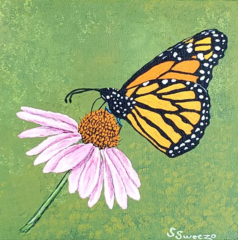 A monarch butterfly sitting on a purple coneflower on a green background.